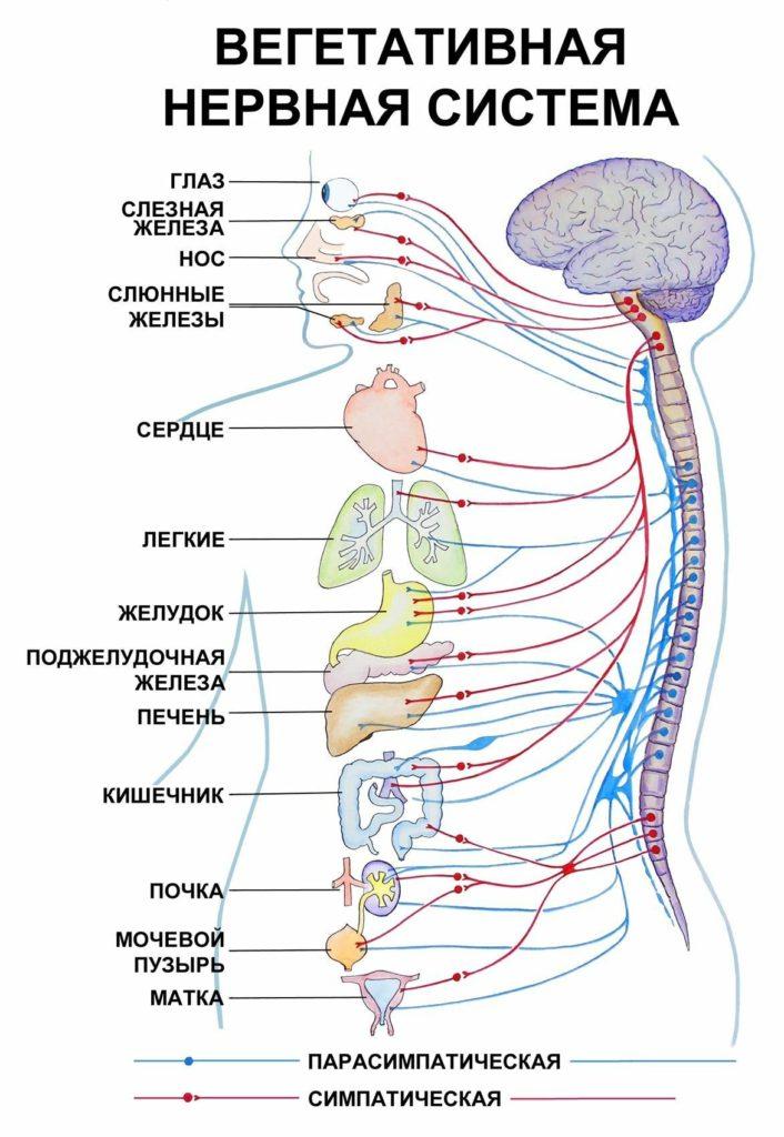 Вегетососудистой дистония
