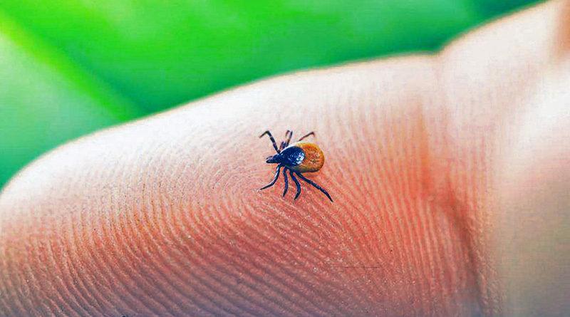 7 опасных заболеваний, которые могут переносить клещи