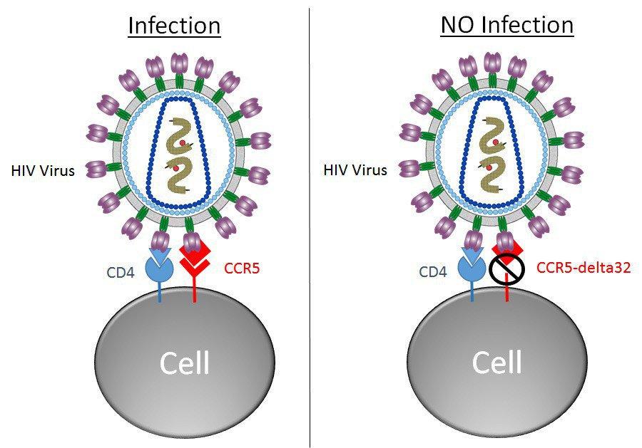 Сколько людей удалось излечить от СПИД