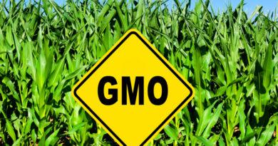 ГМО масло из сои, так ли оно опасно? Американские рестораны с ГМО