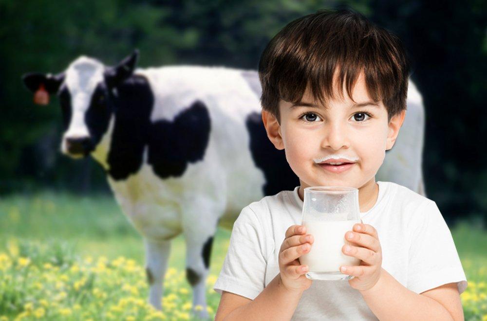 Коровы с ДНК человека