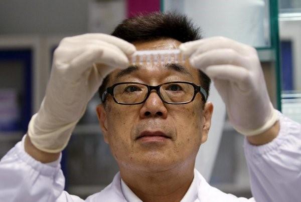 Коровы с ДНК человека выведены в китае