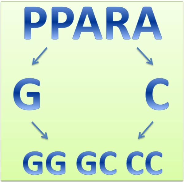 Ген PPARA и спортивные достижения
