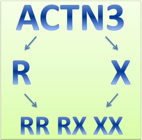 Ген ACTN3 и спортивные достижения