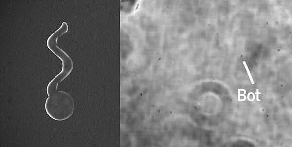 Микро-боты в глазе под микроскопом