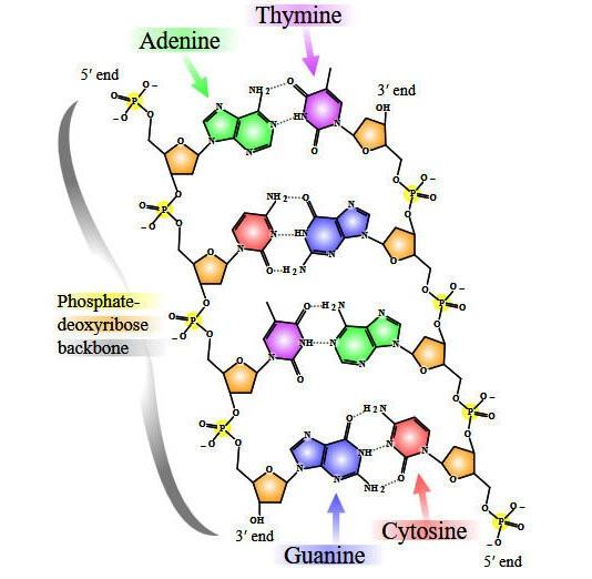 Полусинтетический организм